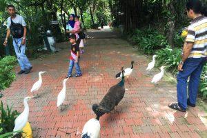 マレーシアの動物園は絶対行くべき!鳥が放し飼いのバードパーク!
