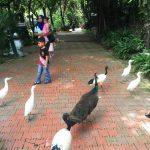 鳥が放し飼いのマレーシアのバードパークは絶対オススメ